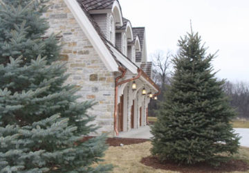 Custom Renovation Stone and Trees